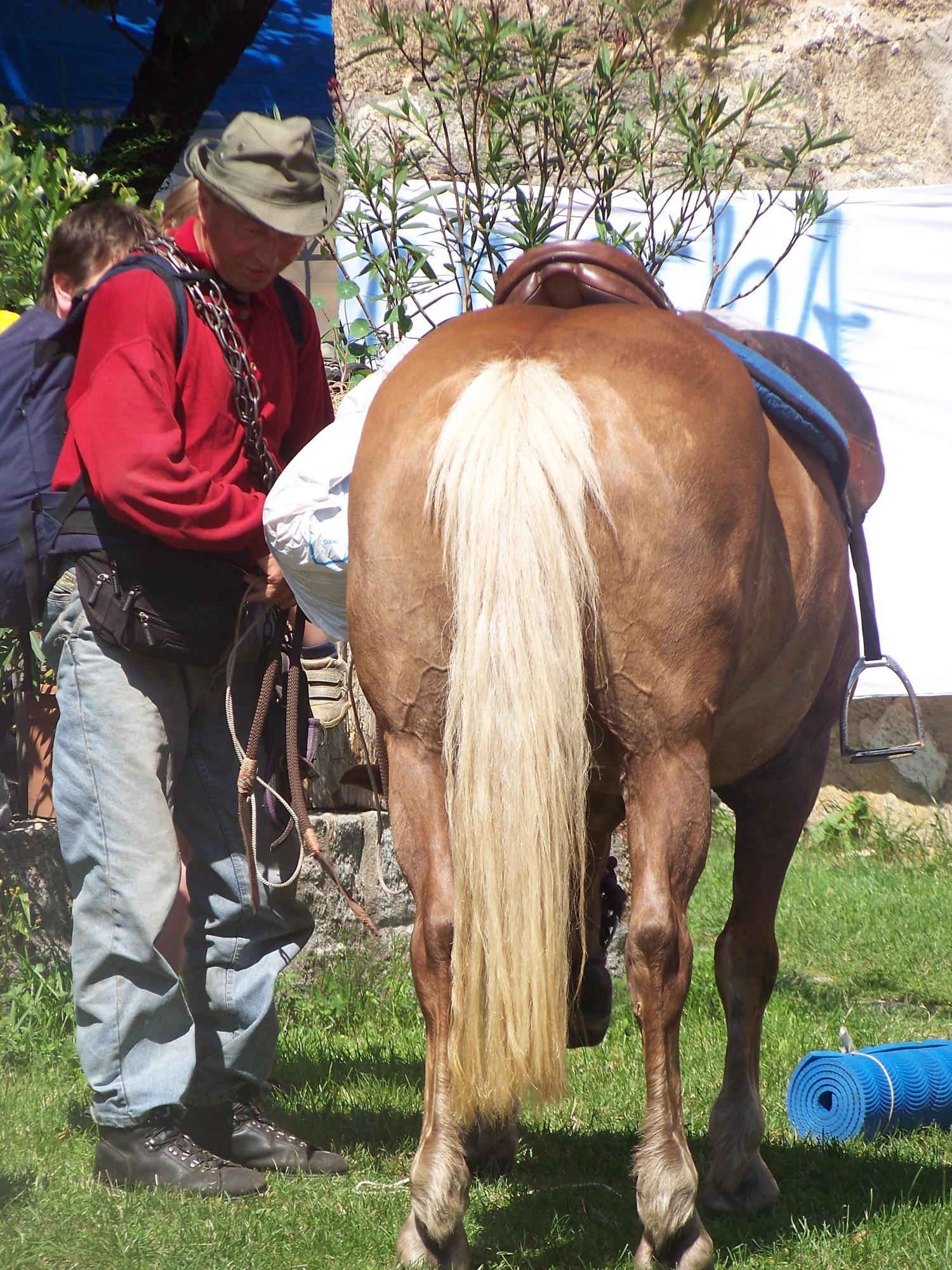 Pilger mit Pferd